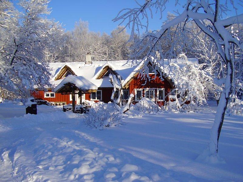Tammiku-talv-031